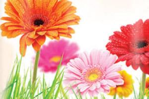 spring-fresh