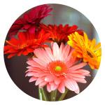 Floral Air Scents Fragrances